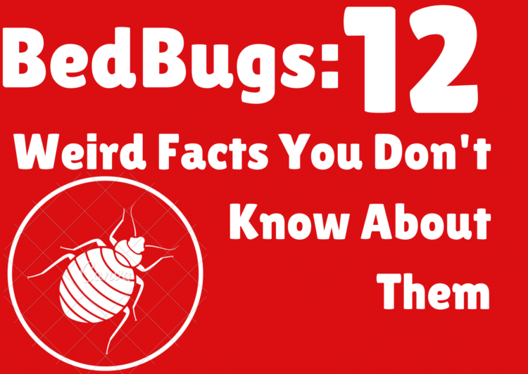 12 Weird Facts You Don't Know About BedBugs